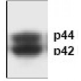 AP00033PU-N