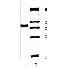 BA1006