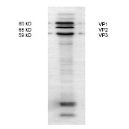 BP5025