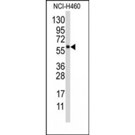 AP14749PU-N