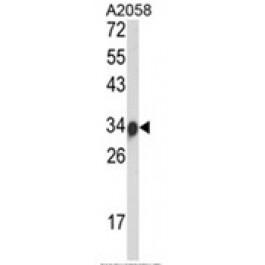 AP18067PU-N
