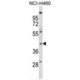 AP18025PU-N