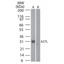 AP22224PU-N