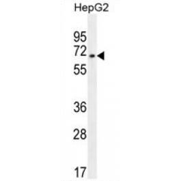 AP54731PU-N