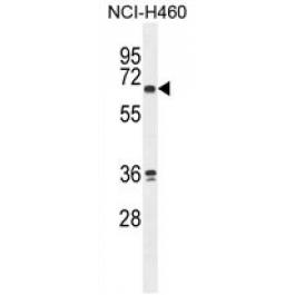 AP54724PU-N