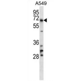 AP54722PU-N