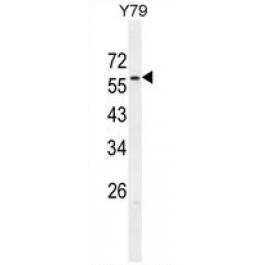 AP54712PU-N