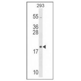 AP53713PU-N