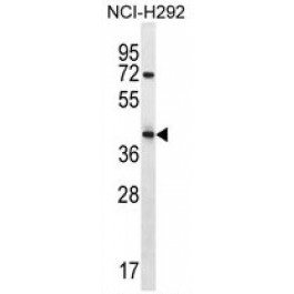 AP50260PU-N