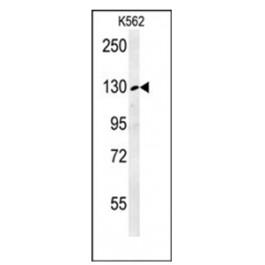 AP53764PU-N