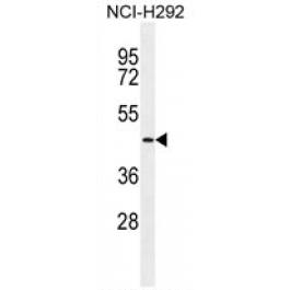 AP54298PU-N
