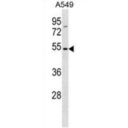 AP54280PU-N