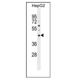 AP53803PU-N
