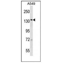 AP53869PU-N