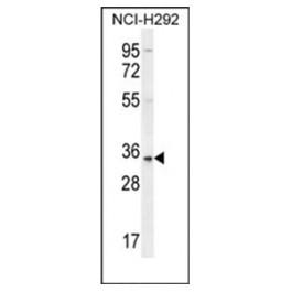 AP53884PU-N