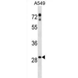 AP54221PU-N