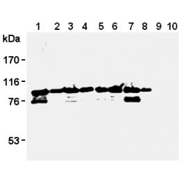 AM26592AF-N