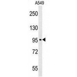 AP50995PU-N
