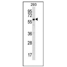 AP51186PU-N
