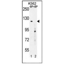 AP51242PU-N