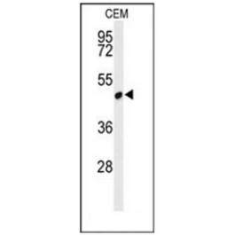 AP51534PU-N