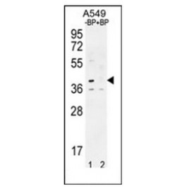 AP51540PU-N