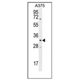 AP51606PU-N