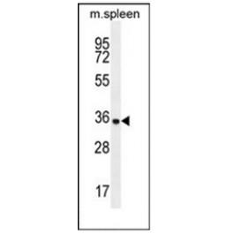 AP51677PU-N