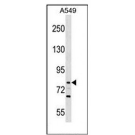 AP51890PU-N