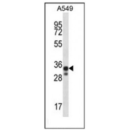AP51891PU-N