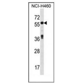 AP52139PU-N