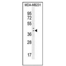 AP52234PU-N