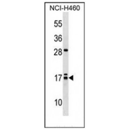 AP52342PU-N