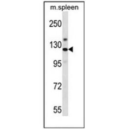 AP52346PU-N