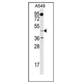 AP52375PU-N