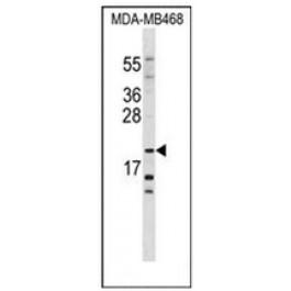 AP52456PU-N