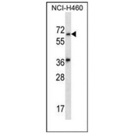 AP52490PU-N