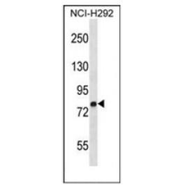 AP52713PU-N