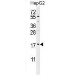 AP52745PU-N