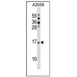 AP52815PU-N