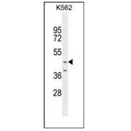 AP52986PU-N