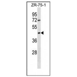 AP53041PU-N