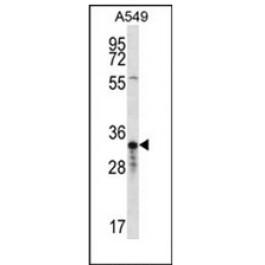 AP53055PU-N