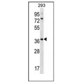 AP53101PU-N