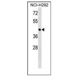 AP53127PU-N