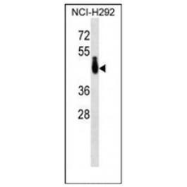 AP53147PU-N