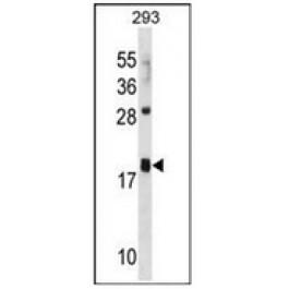 AP53150PU-N