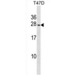 AP53299PU-N