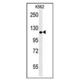 AP53395PU-N