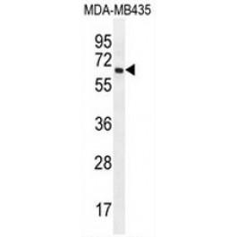 AP53433PU-N